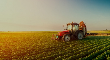 Cereales: las últimas estimaciones indican que la cosecha crecerá un 45% respecto a la del año pasado
